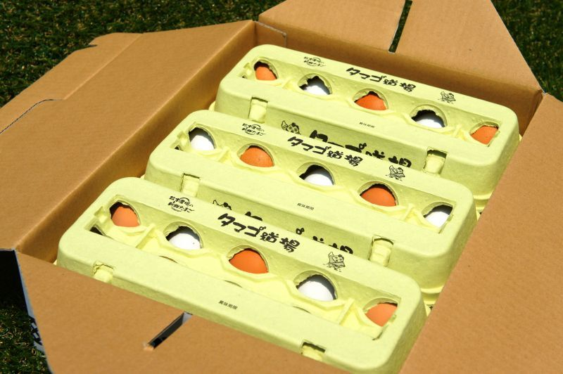画像3: 赤白卵30個入り化粧ケース